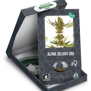 Alpine Delight CBD Automatic