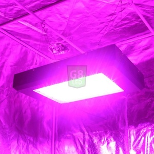 450-Watt Full Spectrum G8LED Bloom Only